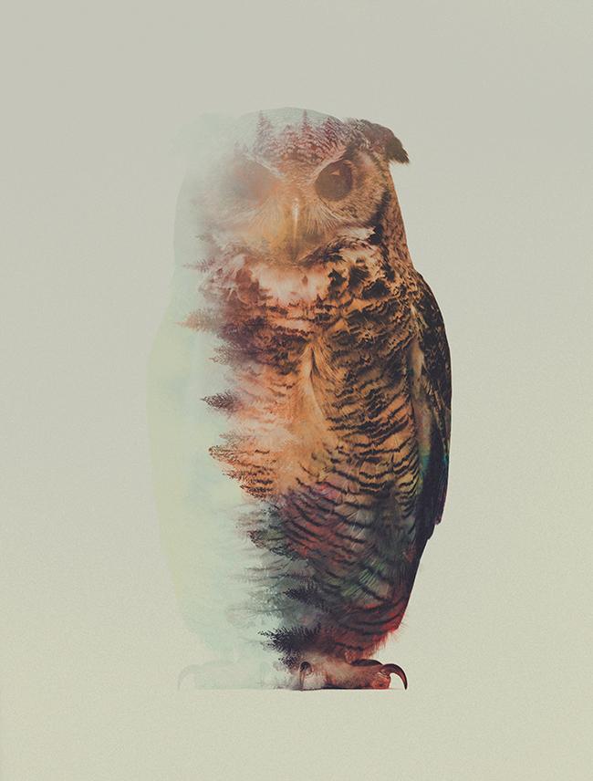 dyr-landskap (14)