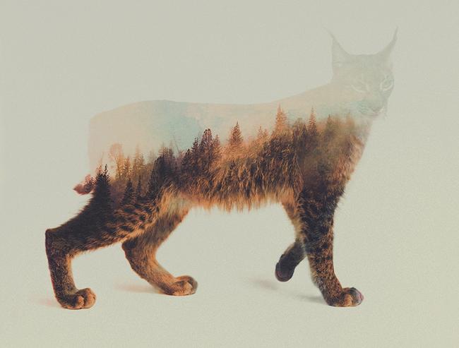 dyr-landskap (15)