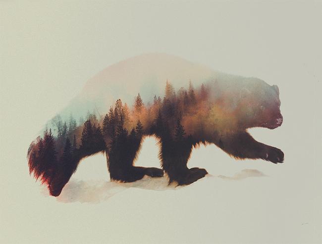 dyr-landskap (16)