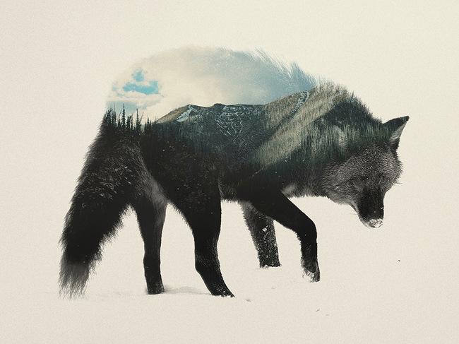 dyr-landskap (2)