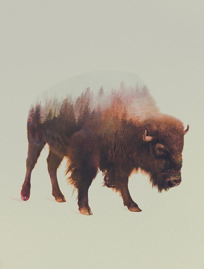 dyr-landskap (4)
