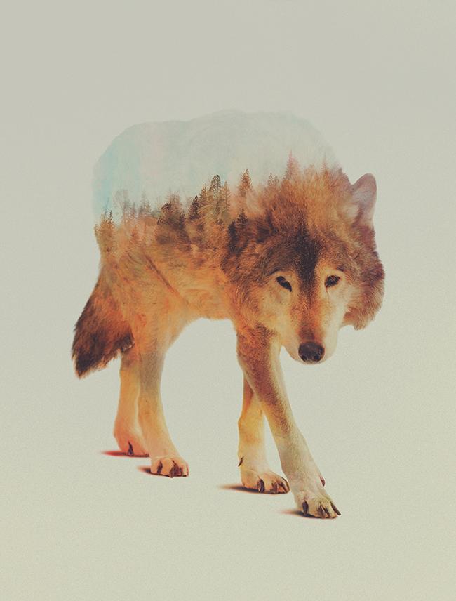 dyr-landskap (7)