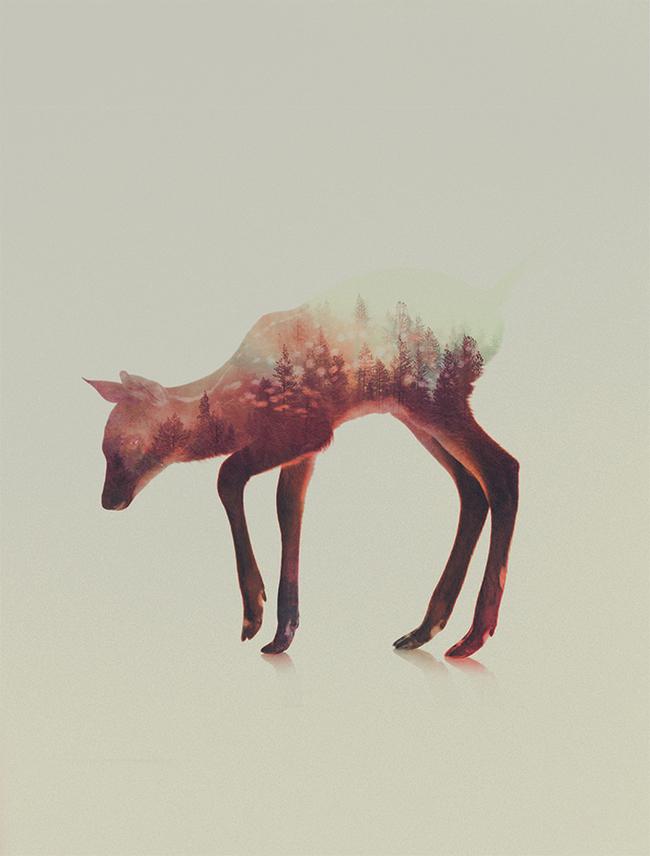 dyr-landskap (9)