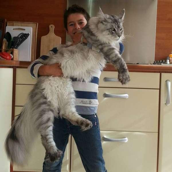 store-katter (7)