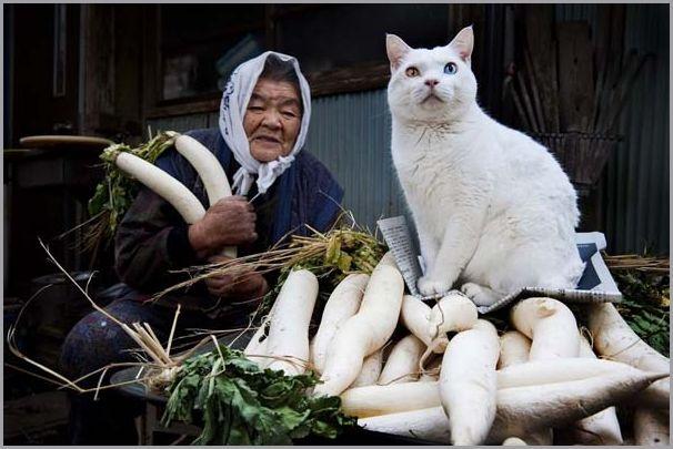 kvinne-og-katt (11)