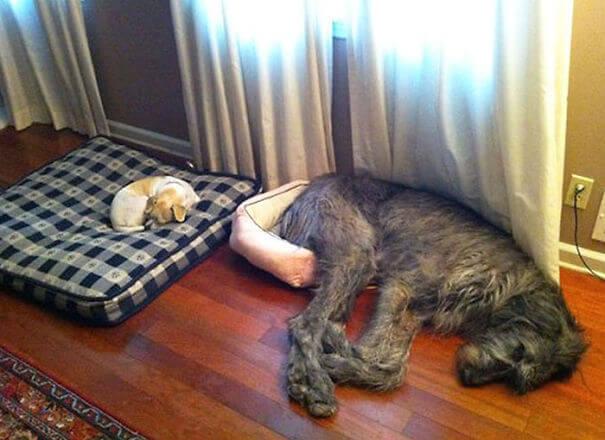 store-hunder (11)
