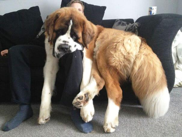 store-hunder (2)