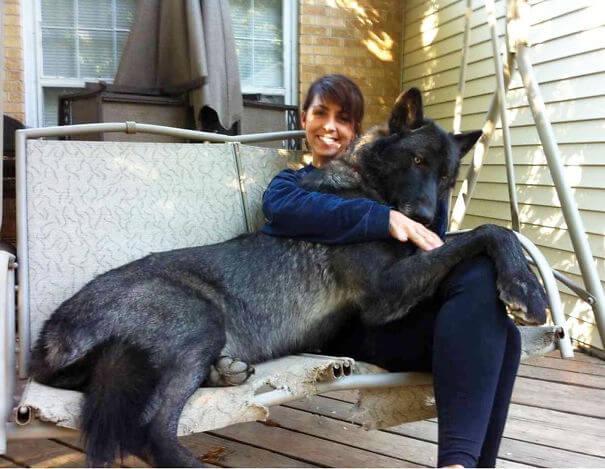 store-hunder (3)