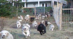 45-hunder