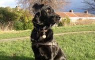 Utrolig! Heltehund reddet kvinnes liv med Heimlich-manøveren.