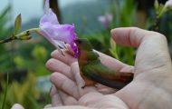 Han fant en fortumlet kolibri i ferd med å bli spist. Det som skjedde videre er kjempebra.