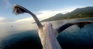 En pelikan som ikke kunne fly dukket opp. Det disse gutta gjorde er ubeskrivelig fenomenalt.