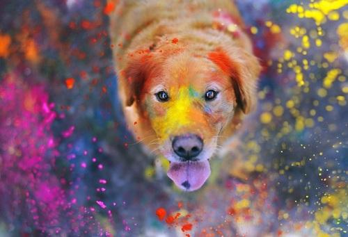 fotogenhund2
