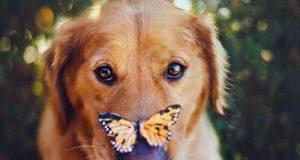 Jeg fant akkurat verdens mest fotogene hund. Hvis ikke dette får deg til å føle deg bra, vil ingenting gjøre det.