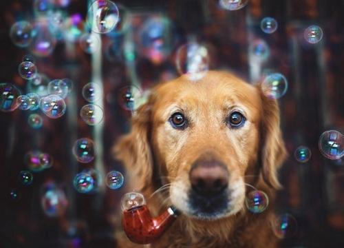 fotogenhund4