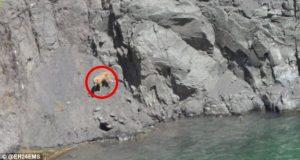 Hund falt ned i over 200 meter dyp gruvesjakt. Men det er ikke hva som sjokkerte meg mest.