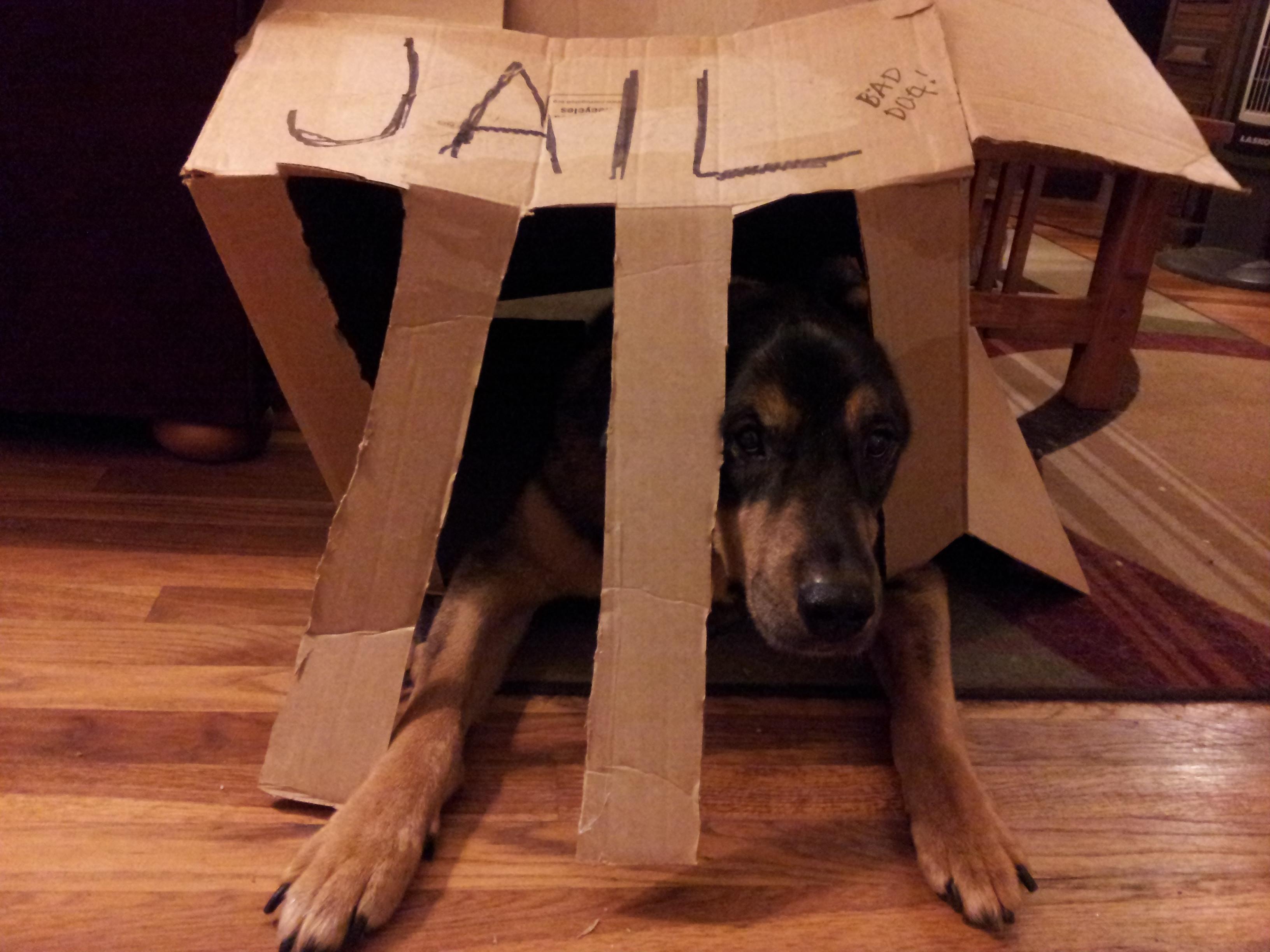 guilty9