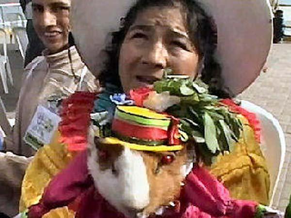 guinea-pigs7