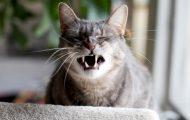 20 hysteriske bilder av katter som er i ferd med å nyse. Ja, dette eksisterer faktisk.