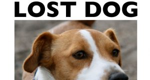 Denne karen trodde han aldri skulle finne hunden sin igjen. Så fulgte han dette tipset og fant sin beste venn.