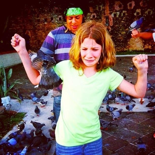 pigeons17