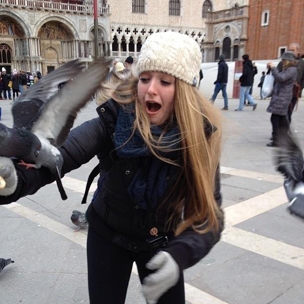 pigeons7