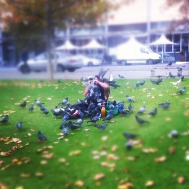 pigeons9