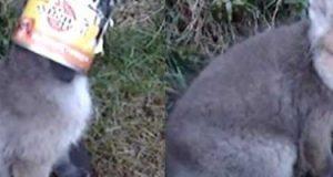 Denne unge reven satt hodet sitt fast i søppel og var i trøbbel. Så fant denne mannen ham.