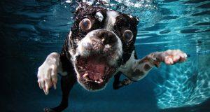 Det startet med en ulydig hund. Det endte med denne FANTASTISKE bildeserien av hunder i vann.