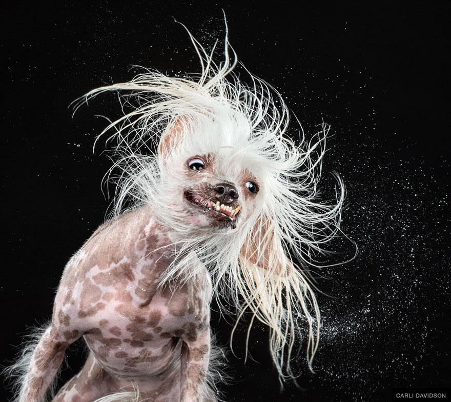 shake-dog-photography-carli-davidson-6