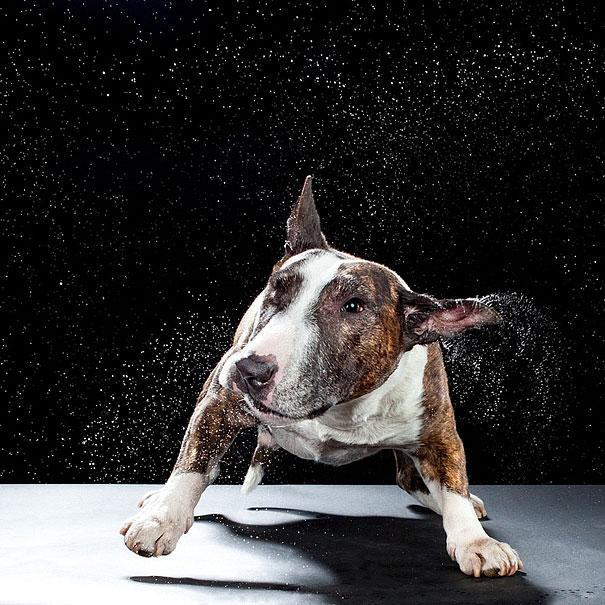 shake-dogs-in-motion-carli-davidson-12