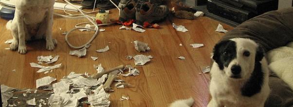 Disse 14 skyldige hundene ble tatt på fersken. Men det er umulig å være langsint – de er ALTFOR søte.