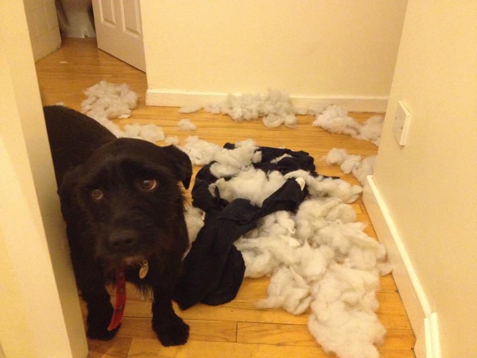 skyldig_hund (7)
