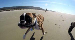 De tok med sin tobeinte hund til stranden for første gang, og han gikk amok… På en god måte.