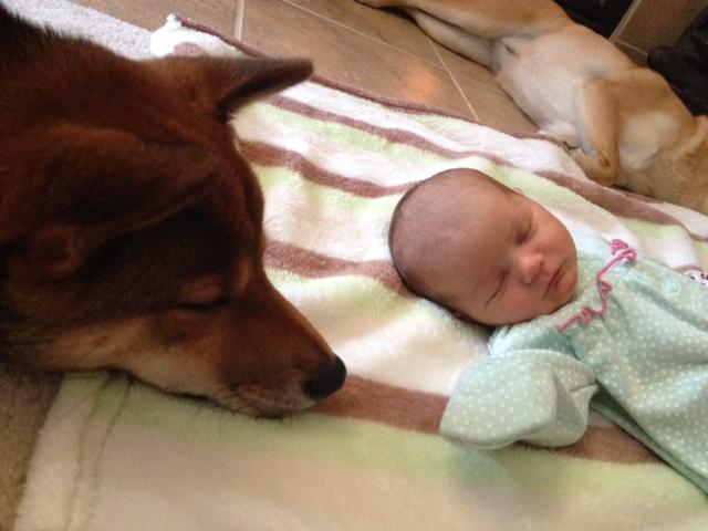 hund-baby10