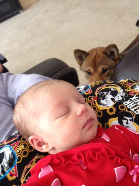 hund-baby5