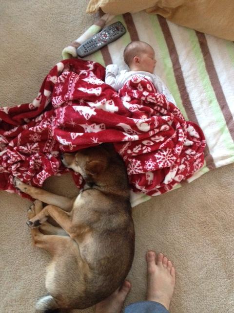 hund-baby7