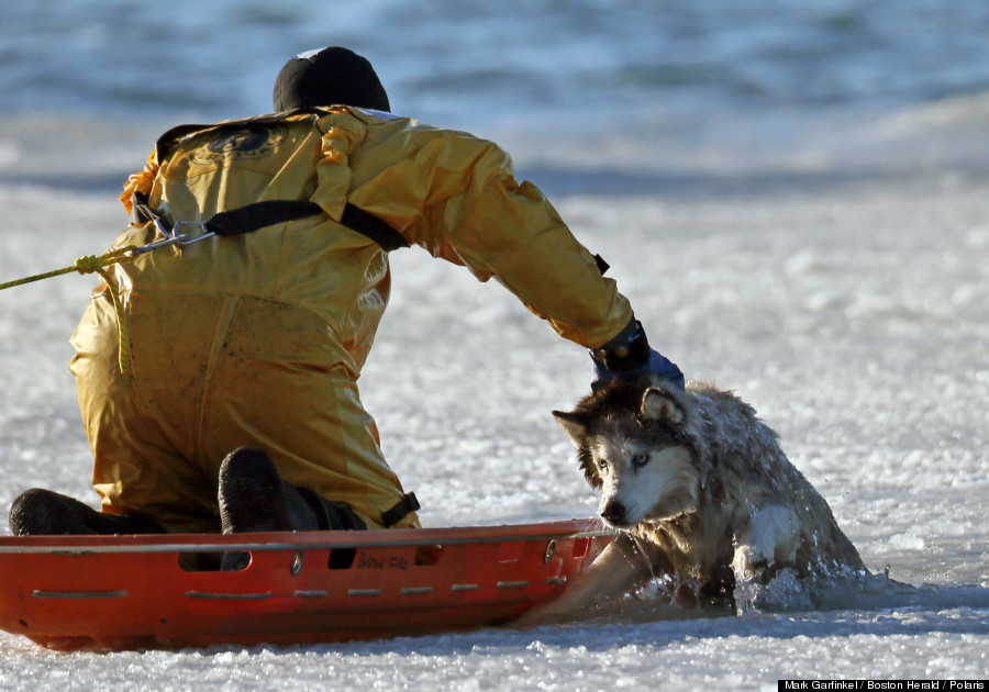 Dog rescued out of frozen lake