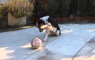 Er dette verdens best dresserte hund? Jeg har ALDRI sett noe lignende. (Få med deg slutten.)