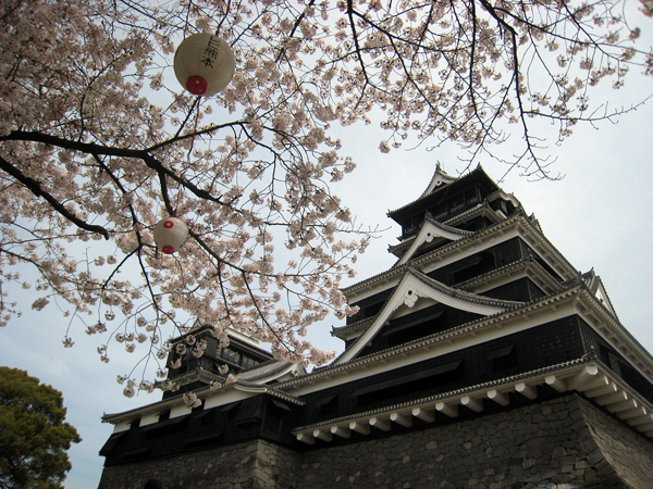 Sakura at Kumamoto Castle