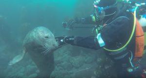 Da disse dykkerne møtte på noen selunger, skjedde det noe de ALDRI hadde forventet.