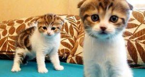 Å herregud, aaawwwww… Aldri har jeg sett noen mer bedårende kattunge-søsken. Hjertet mitt smelter.
