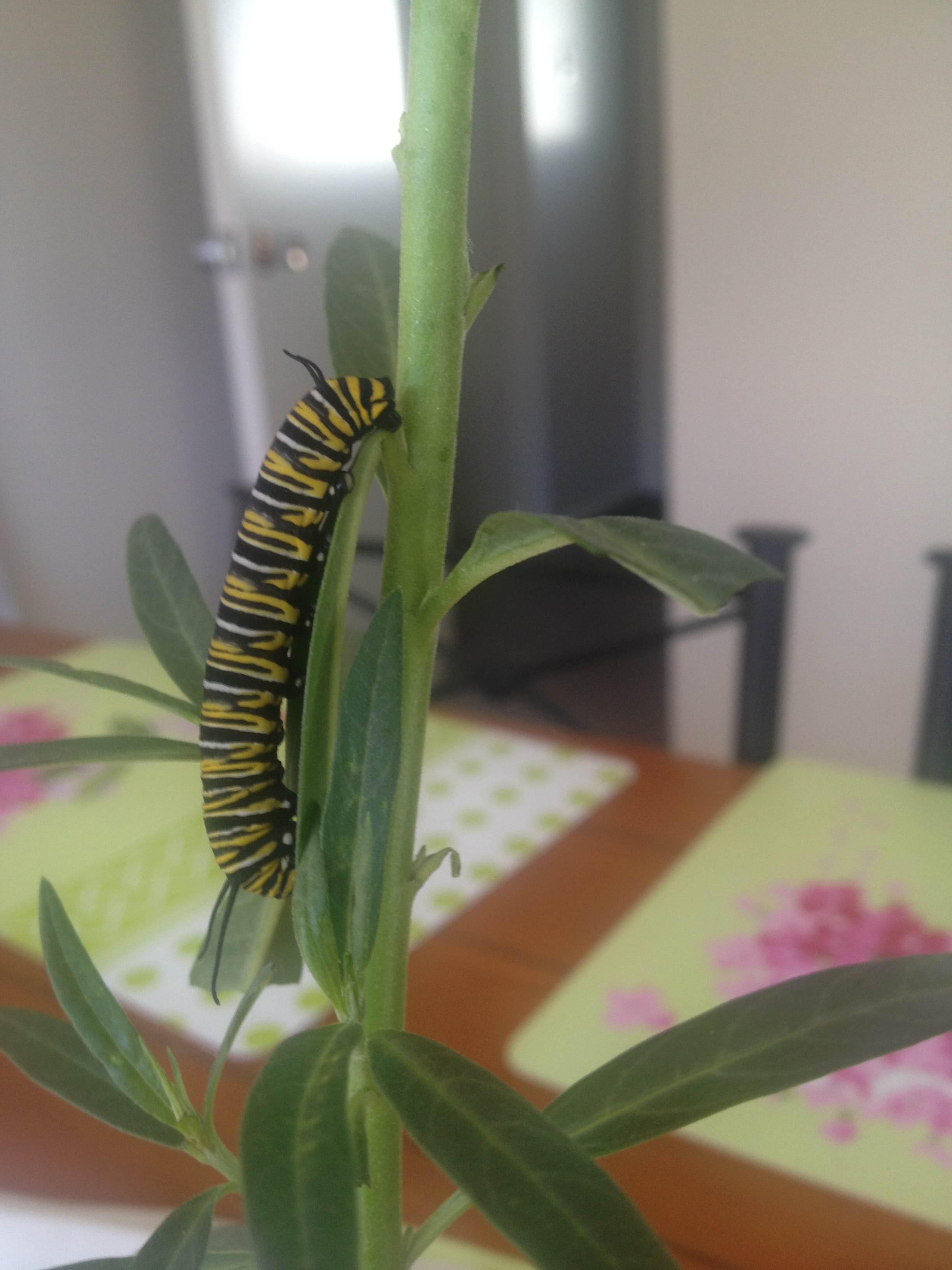 butterfly_pet_06