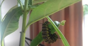 En jente fant noe uventet på sin nye plante. Det som skjedde videre er bare MAJESTETISK.