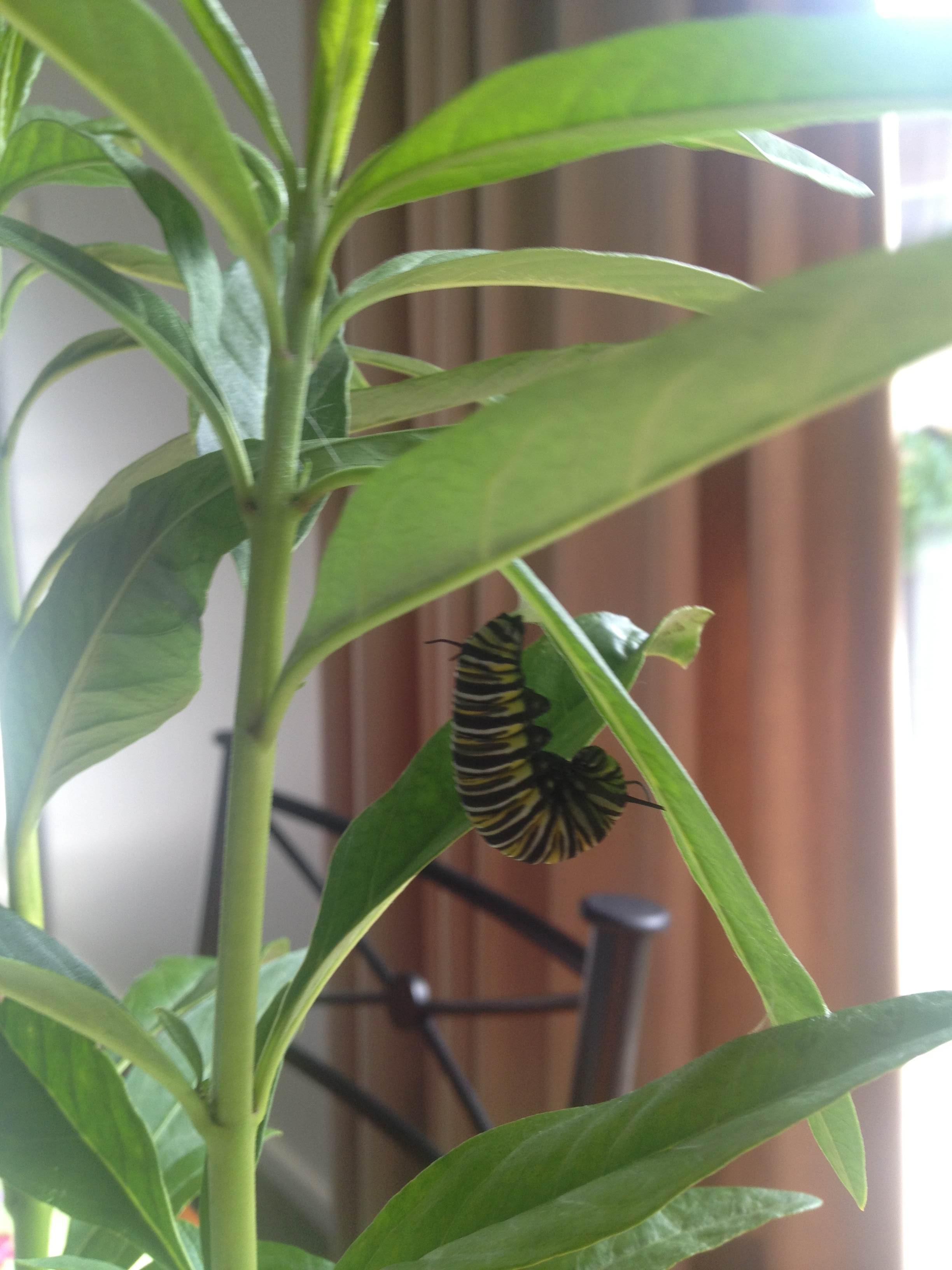 butterfly_pet_07
