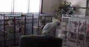 Denne videoen av en fugl som danser til «Another One Bites The Dust» er den morsomste videoen noensinne.