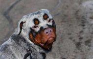 33 av de utseendemessig mest unike hundene i verden. Her var det mye artig og fint.