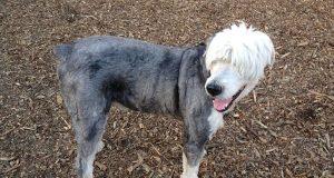 29 hunder tvunget til å leve med de mest hysterisk horrible frisyrene du har sett.