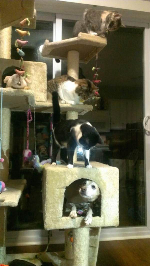 hunder-liker-katteting (1)