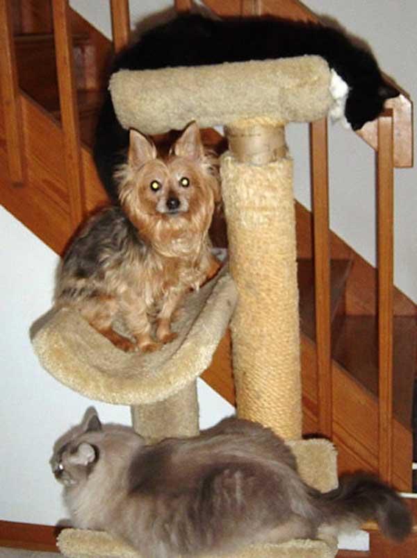 hunder-liker-katteting (12)